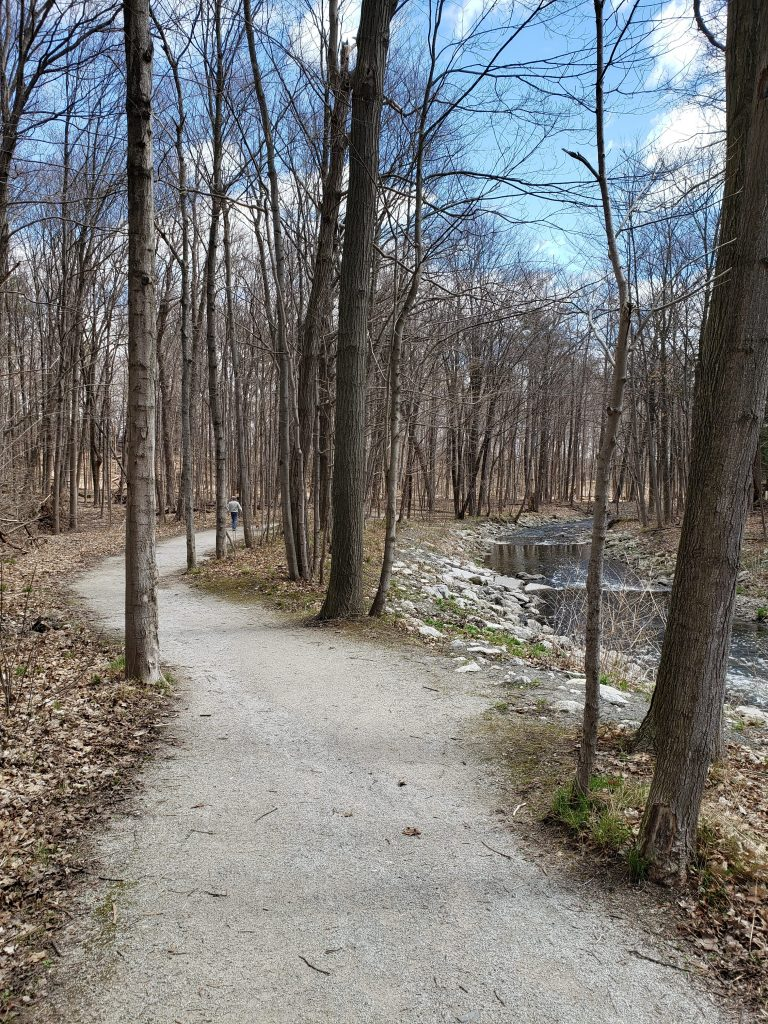 forest walk in Mississauga along a creek