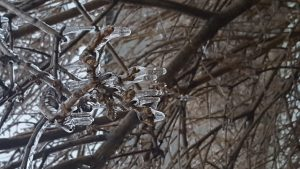 frozen tree ice branch mississauga