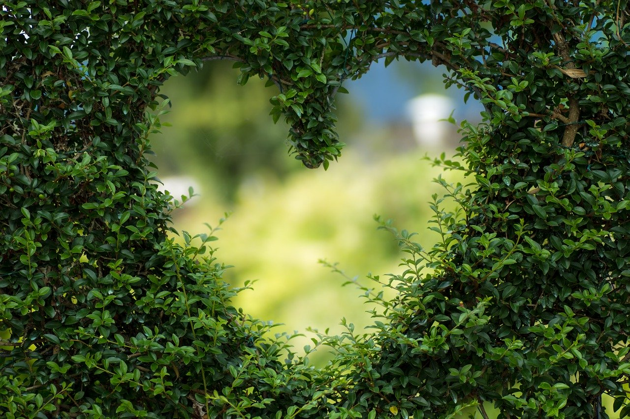 valentine's day heart in green